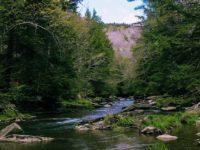 creek-1840163_640