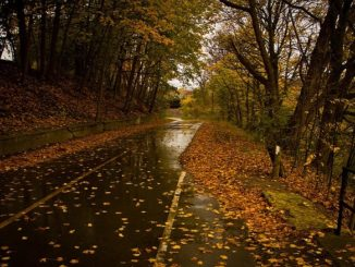 осень дорога