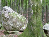 Лес в Тичино.  Автор Websi / pixabay.com